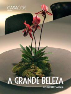 Capa livro A Grande Beleza 228x300 - São Paulo respira design com o DW!