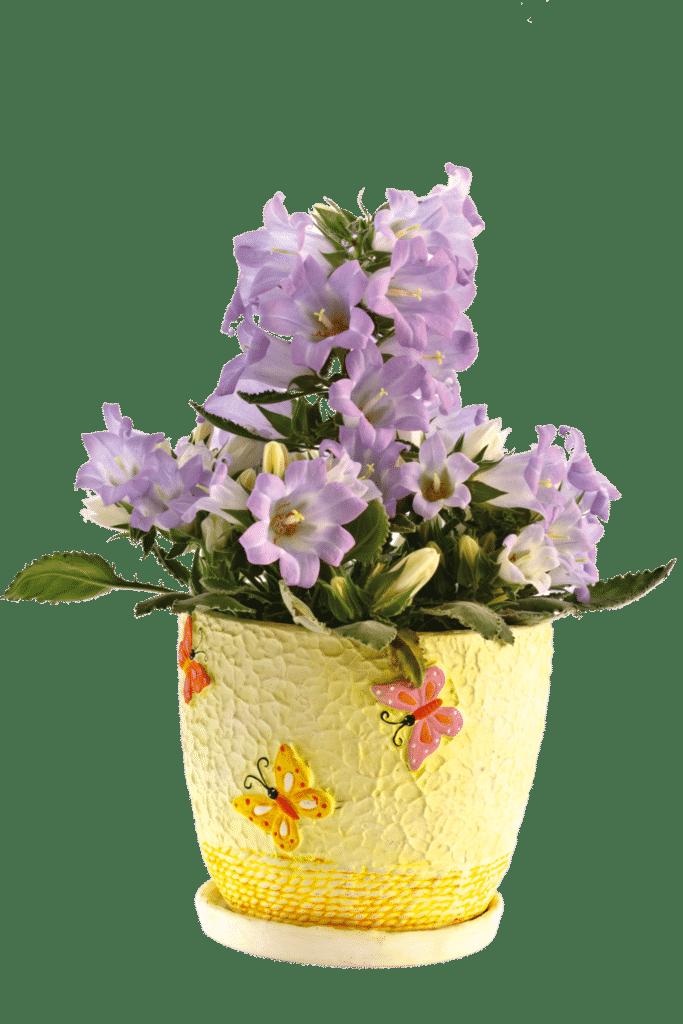flor goivo shutterstock 75566746 Peredniankina 683x1024 - #SIMRetrô com Tita de Paula